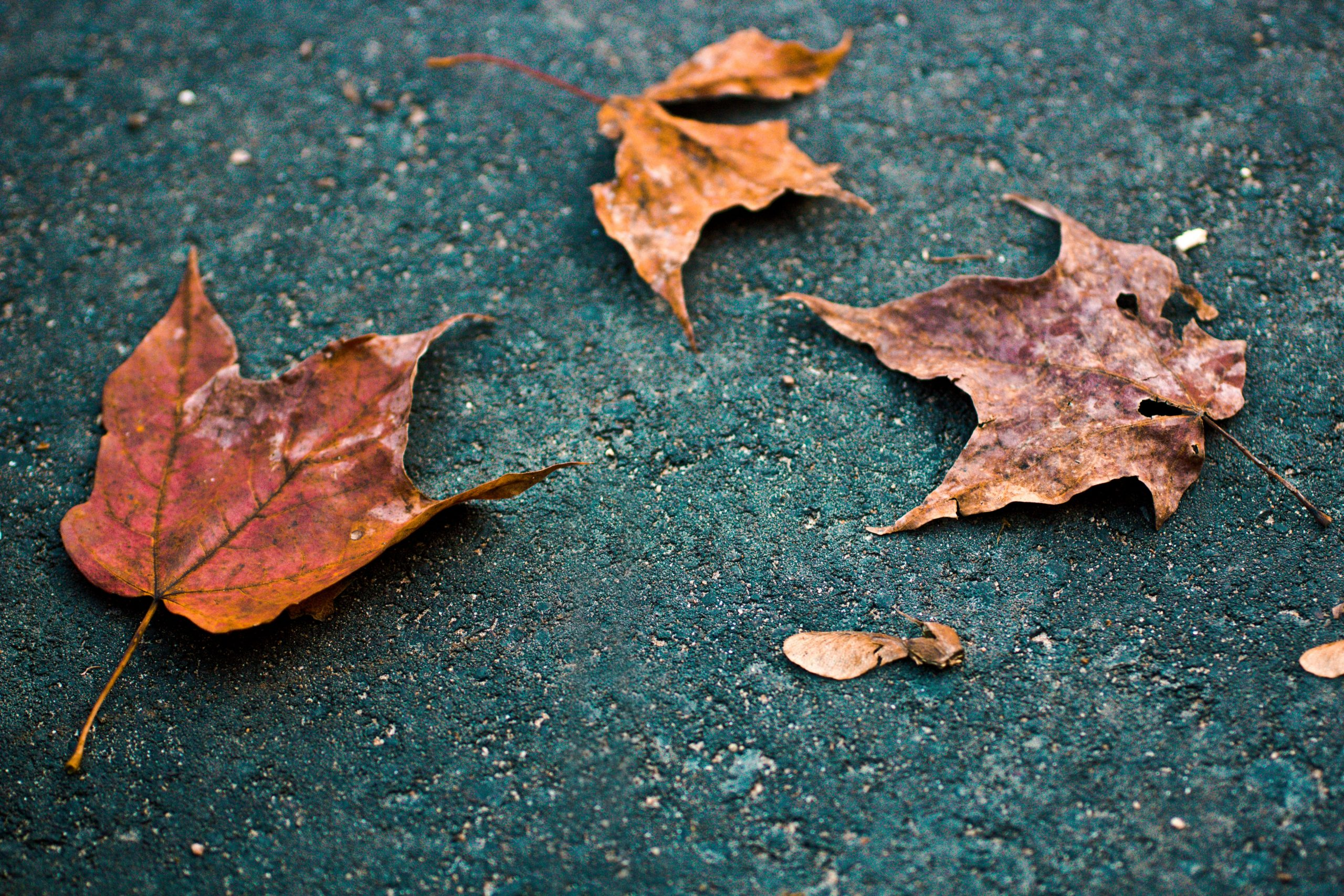 Fear of death poem autumn leaves